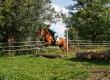 photos-ecurie-du-moulin-05235821