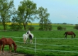photos-ecurie-du-moulin-46148858